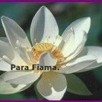 Para Fiama-vert