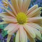 Fondos de escritorio: Flor de Invierno [Imagen 1280×1024]