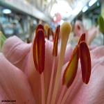 Flores en el Mercado del Arenal de Sevilla [Imagen][ photo ]