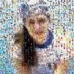 Mosaico de fotos paso a paso con Foto-Mosaik
