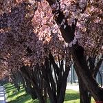 Hoy 21 de marzo es el Día Internacional del Árbol