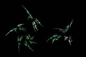 """<h3> Apophysis: Galería de imágenes fractales</h3>    <a href=""""http://piziadas.com/2011/09/apophysis-galeria-de-imagenes.html"""">Apophysis-110911-22</a>"""