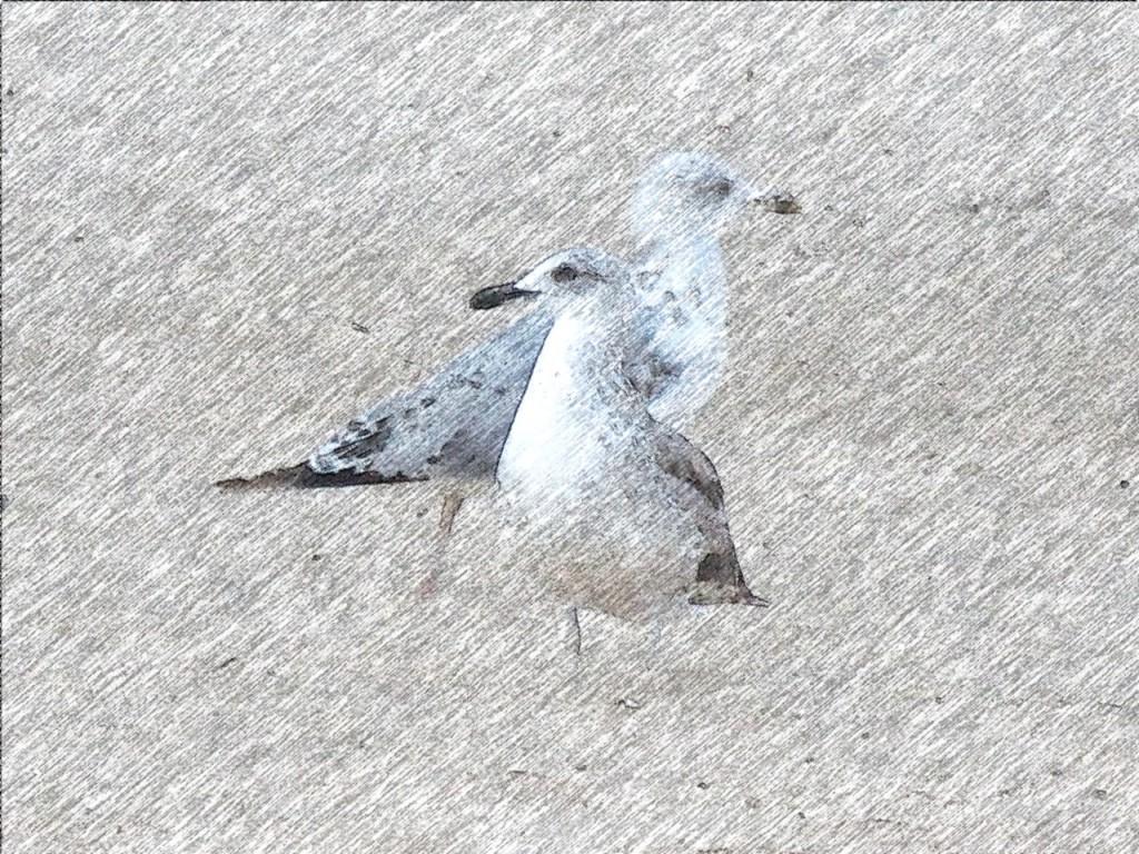 FotoSketcher-gaviotas-lapiz