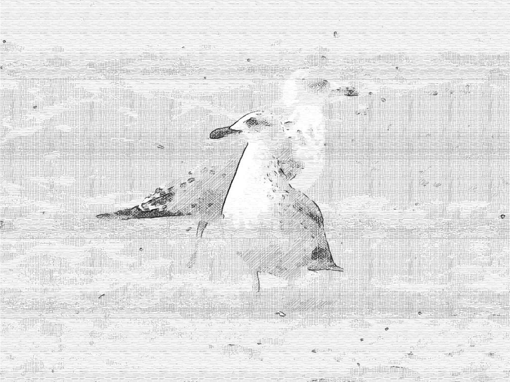 FotoSketcher-gaviotas-tinta