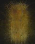 microcolumna