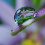 The beauty of pollination [ TED ] [ Vídeo ]