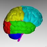 Cerebro [ imagen de síntesis ]