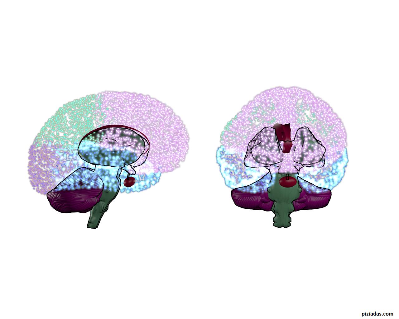 Cerebro II [ Wallpaper ] [ Imagen ] – PIZiadas gráficas