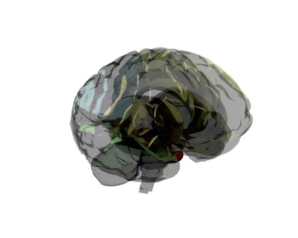Brain con renderizado Toon y transparencia de lobulos