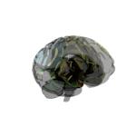 Brain : cerebro con renderizado transparente