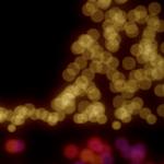 Postal de navidad de Max Schwenzer