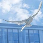 SmartBird : 'N robot wat vlieg soos 'n voël [ TED ]