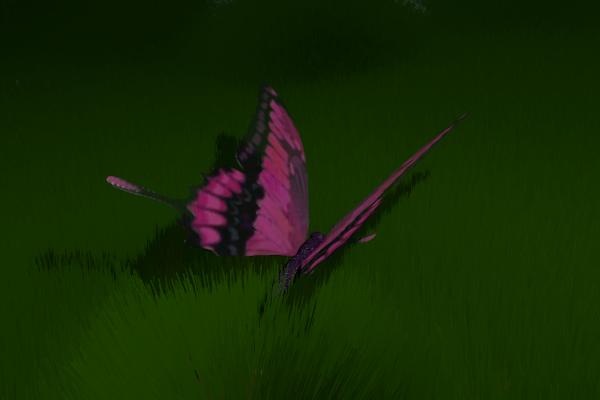 mariposa_600_400